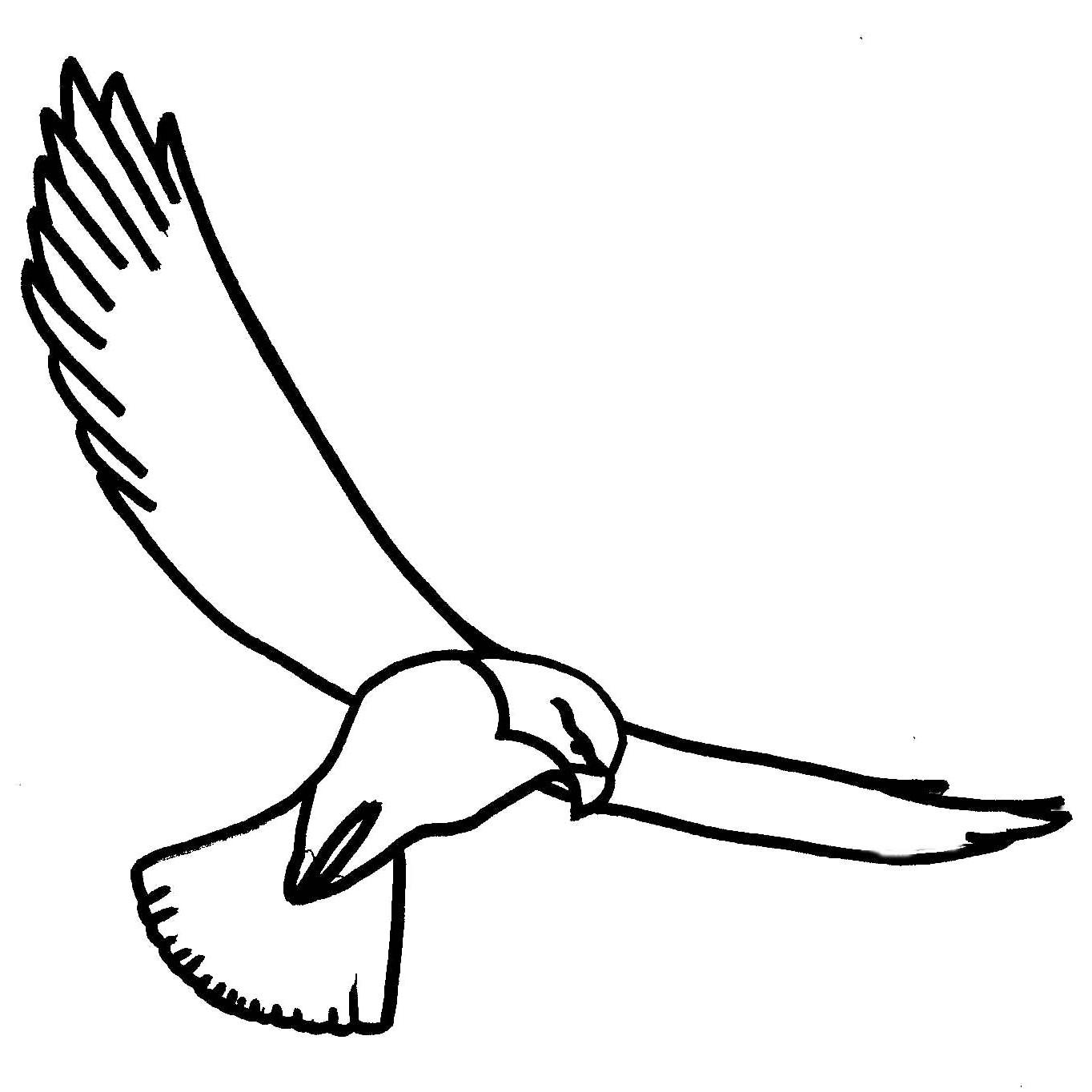 Hawk-Line-Art-square